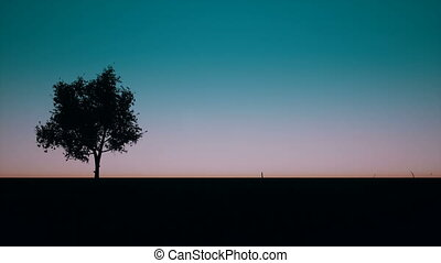 Sunrise tree and grass