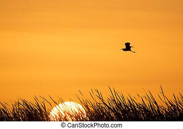 Sunrise Tri-colored Heron SIlhouette - A Tri-colored Heron...