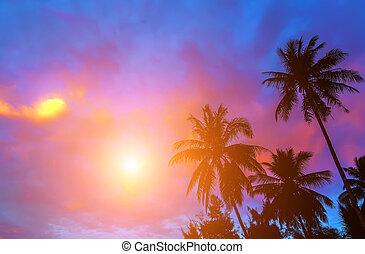 Sunrise Tropical bounty