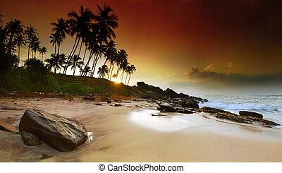 Sunrise under the palms - Extremely beautiful vivid sunrise...
