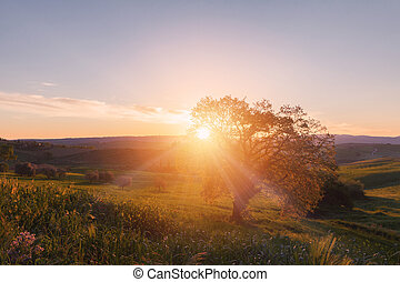 Sunrise with lonely tree