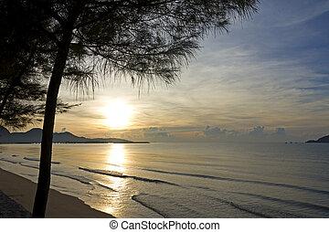 Sunrise with pine