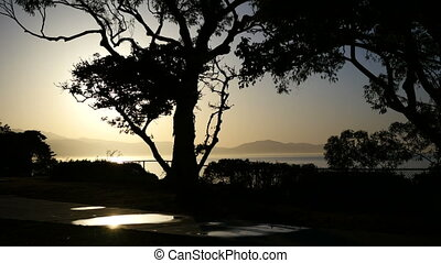 Sunrise with tree - Silhouette of a tree during sunrise at...
