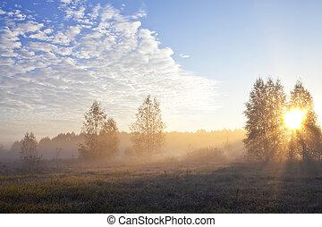 Sun's rays in the fog