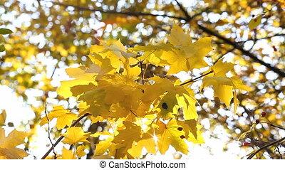 sun's rays shining through autumn l