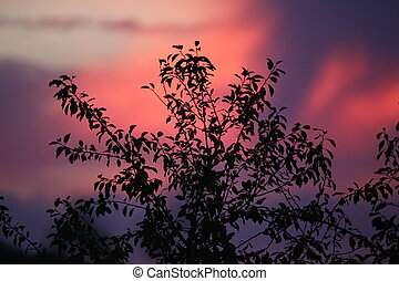 A beautiful sunset with the silhouette of a tree