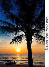 sunset and beach. view of a beach with palm trees