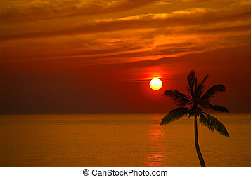 Sunset and Coconut