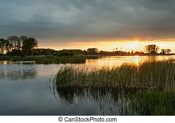Sunset and dark clouds over a lake with green reeds