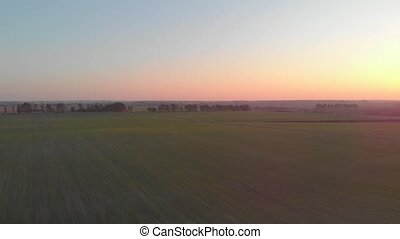 Sunset and green field drone aerial view