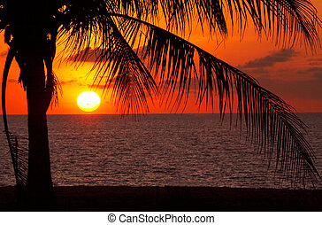 Sunset and palm - Palm black outline during sunset on the...