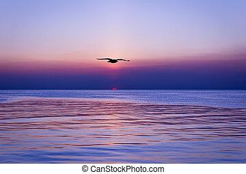 sunset and silhouette bird