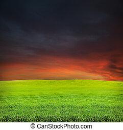 sunset and summer evening field