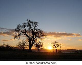 sunset at a vineyard in autumn - Beautiful vineyard...