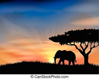 Sunset at africa