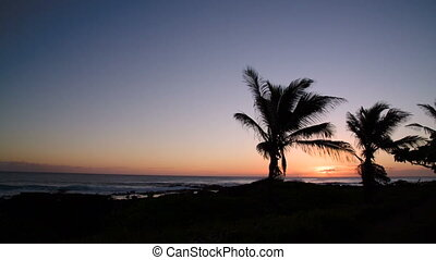 Sunset at beach with palm trees
