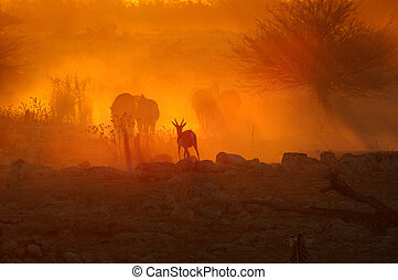 Sunset at Okaukeujo, Namibia - A fiery sunset at Okaukeujo...