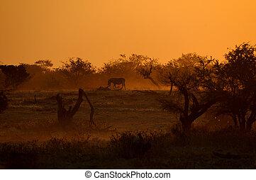 Sunset at Okaukeujo waterhole, Namibia