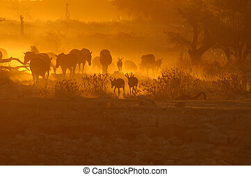 Sunset at Okaukeujo waterhole, Namibia