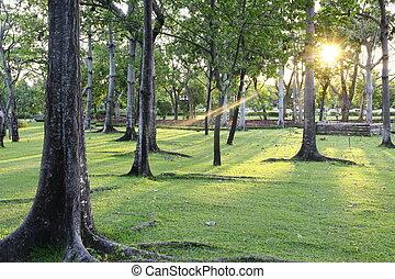 sunset at park
