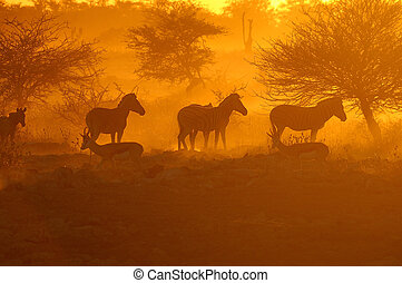 Sunset at the Okaukeujo waterhole