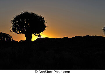 Sunset at the Quiver Tree Forest, Namibia