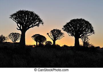 Sunset at the Quiver Tree Forest