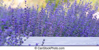 sunset., aus, frankreich, büsche, lavendel, sonnenuntergang, closeup, schein, lila, gebiet, blumen, provence, lavender.