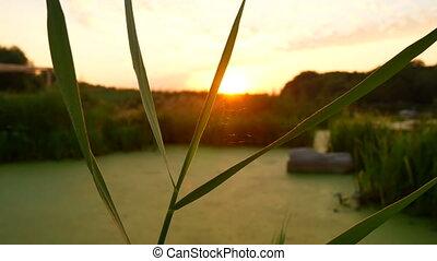 Sunset autumn river sun - Evening sunset at autumn in the...
