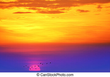 sunset back on the evening light colorful cloud on sky and birds flying to home