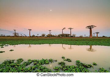 Sunset Baobab lake