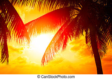 Sunset beach with palm trees and beautiful sky landscape. Beautiful coconut palms silhouettes over orange sun