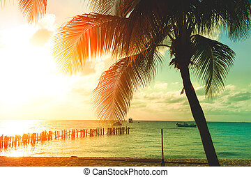 Sunset beach with palm trees and beautiful sky. Tourism, travel, vacation concept