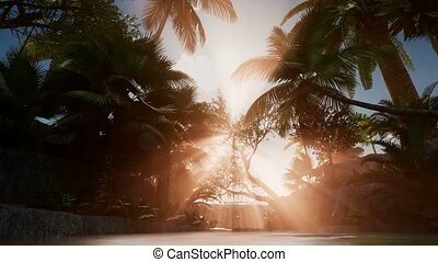 Sunset Beams through Palm Trees - sunset beams through palm...