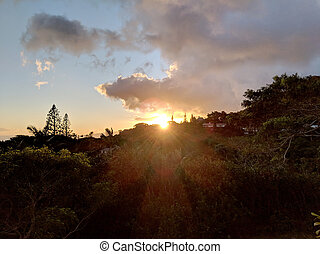 Sunset behind the Tantalus mountain past tropical silhouette of trees