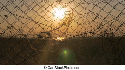 Sunset behind the wire mesh - Moving along the fencing mesh ...