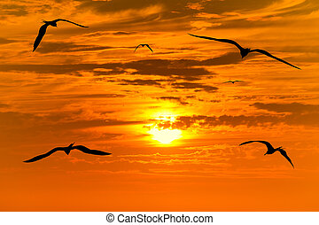 Sunset Birds Flying