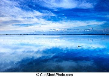 Sunset blue landscape. Little grebe diving bird in a lagoon...