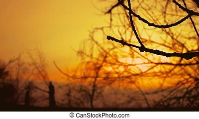 sunset branch nature - dry branch sunset silhouette tree on...