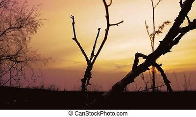 sunset branch nature - birch sunset silhouette tree on...