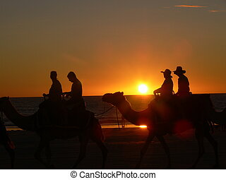 Sunset Camel Ride Cable Beach