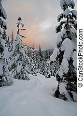 Sunset clouds above a winter forest