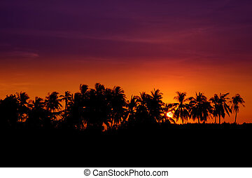 Sunset Coconut Tree Silhouettes