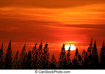 Sunset color sky Clouds float on top silhouette pines