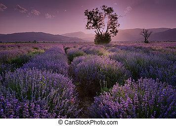 sunset., contrapponendo, fields., tramonto, immagine, paesaggio, colors., lavanda, scuro, estate, nubi, drammatico, field., bello