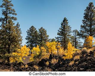 Sunset Crater lava flow autumn leaves, Flagstaff Arizona US