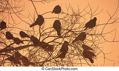 sunset crows flock nature of birds sitting on the tree winter cold