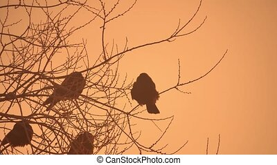 sunset crows nature flock of birds sitting on the tree cold winter