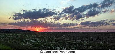 sunset dawn sunrays over the city sky field flowers