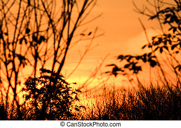 sunset dream sky silhouette row of tree rubber